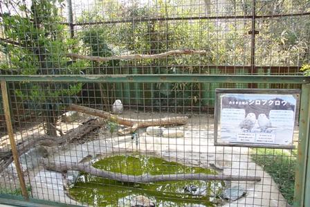 珍しいシロフクロウ