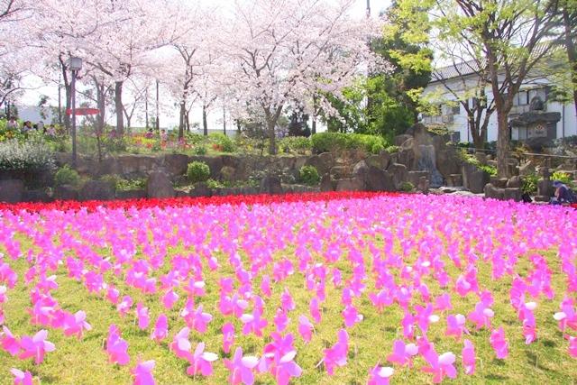 花びより金剛寺、花めぐりの丘