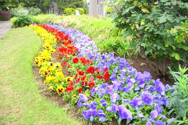ねむの木の庭は、季節により咲く花は様々。