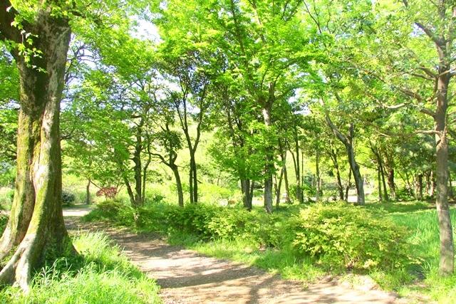 緑に包み込まれる石神井公園内