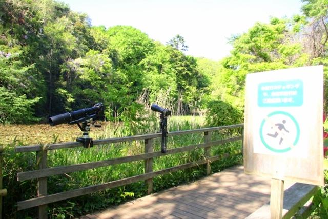 石神井公園の三宝寺池で、野鳥や水鳥の観察を楽しむ