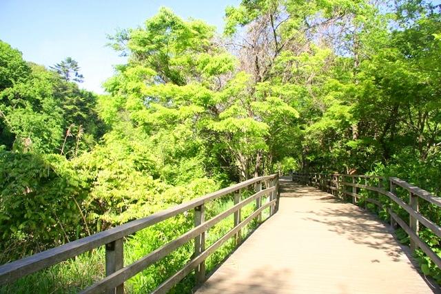 石神井公園、三宝寺池方面へ