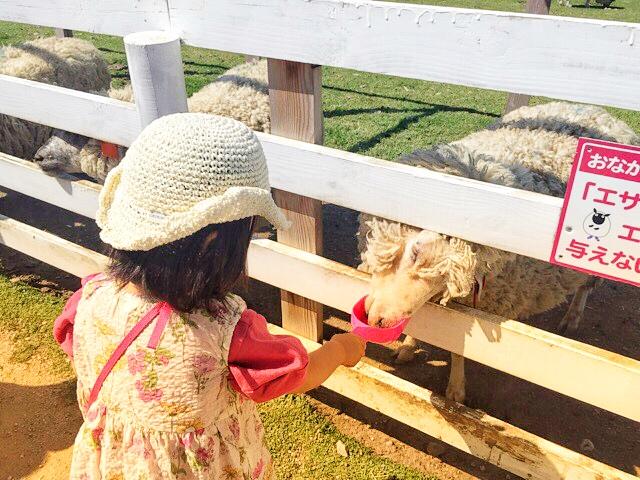 ブルーメの丘では、羊にエサやりができます♪
