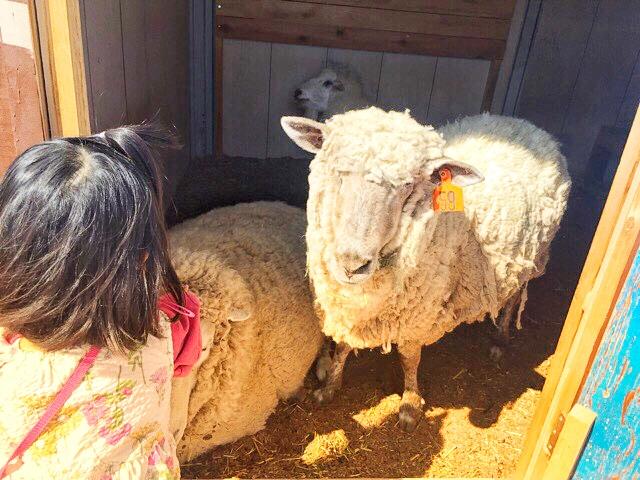 ブルーメの丘で、羊とふれあい