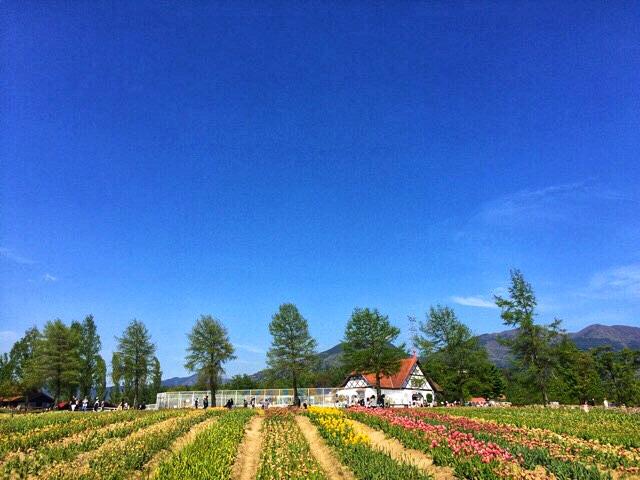 ブルーメの丘、花畑