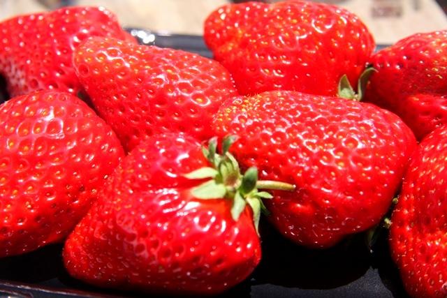 加藤農園のイチゴ