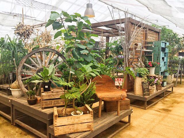 ザファームユニバーサルは植物はもちろん、雑貨も豊富