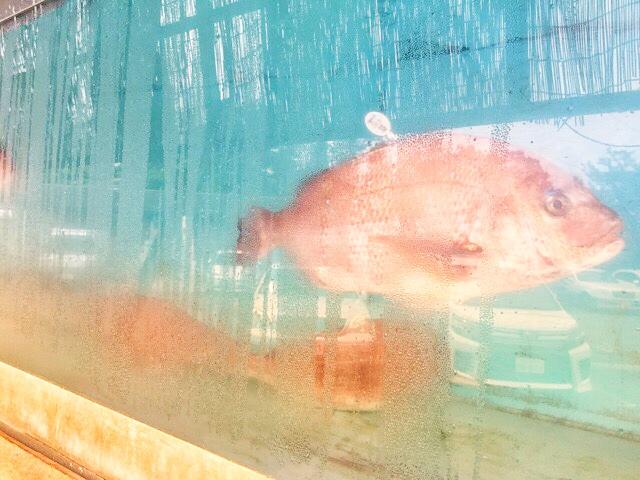 音の花温泉、鯛の生け簀