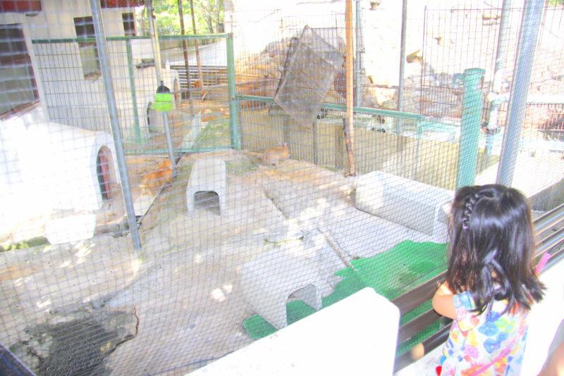 子ども動物園でウサギを観る