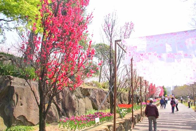 花びより金剛寺