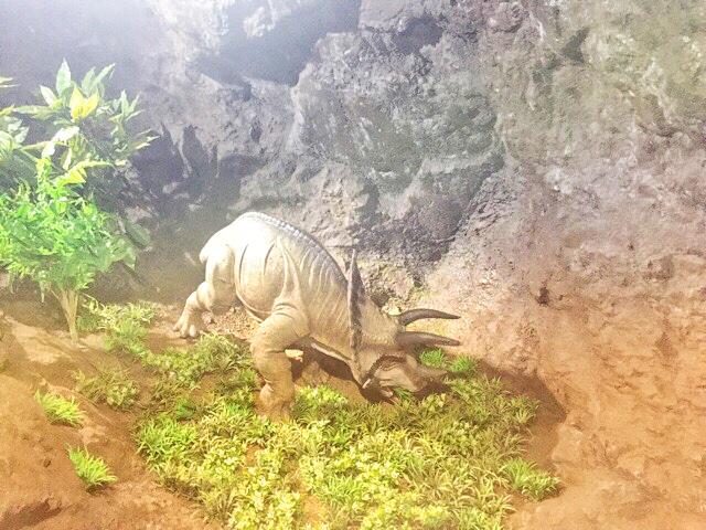 小原洞窟内のトリケラトプスベイビー