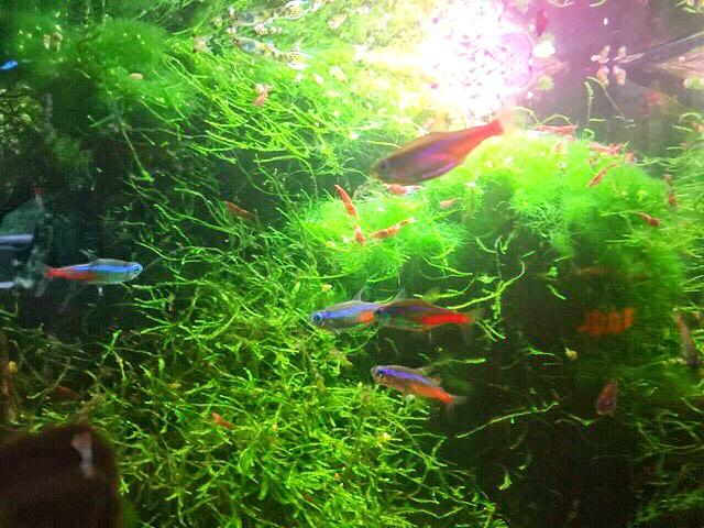 アンダーグランドガーデンの熱帯魚