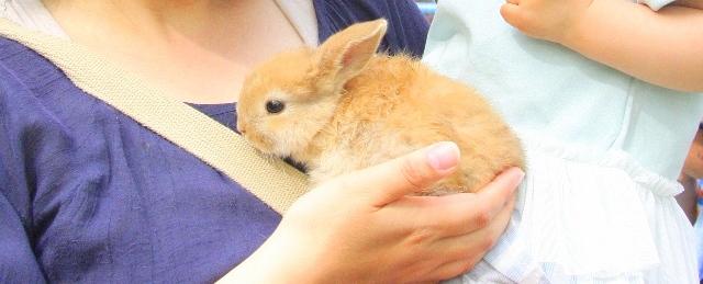 福知山動物園にはウサギがいっぱい!