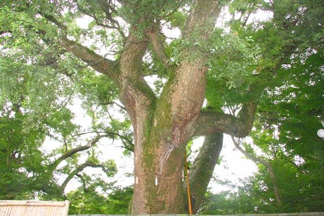 石清水八幡宮、楠木正成の楠