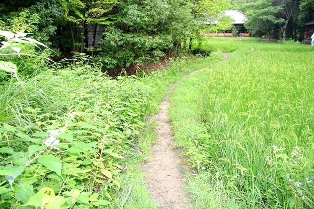 花博記念公園鶴見緑地 山のエリア