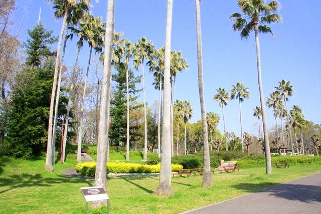 花博記念公園鶴見緑地 山のエリア、国際庭園のカリフォルニア庭園