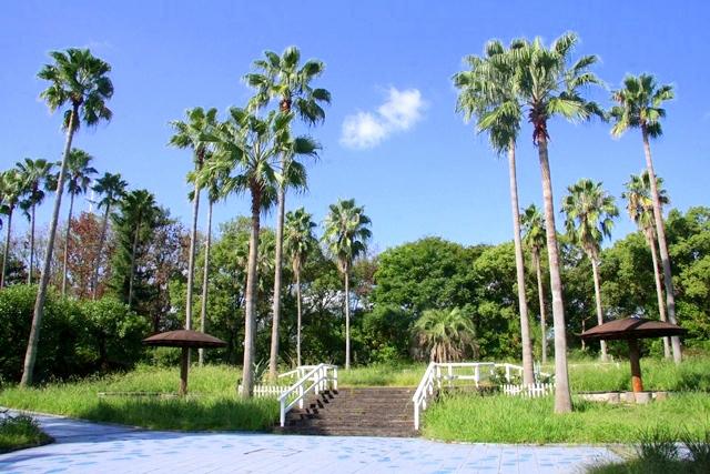 花博記念公園鶴見緑地 山のエリア、国際庭園のハワイ庭園